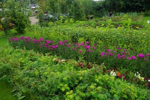 The secret herb garden, Edinburgh