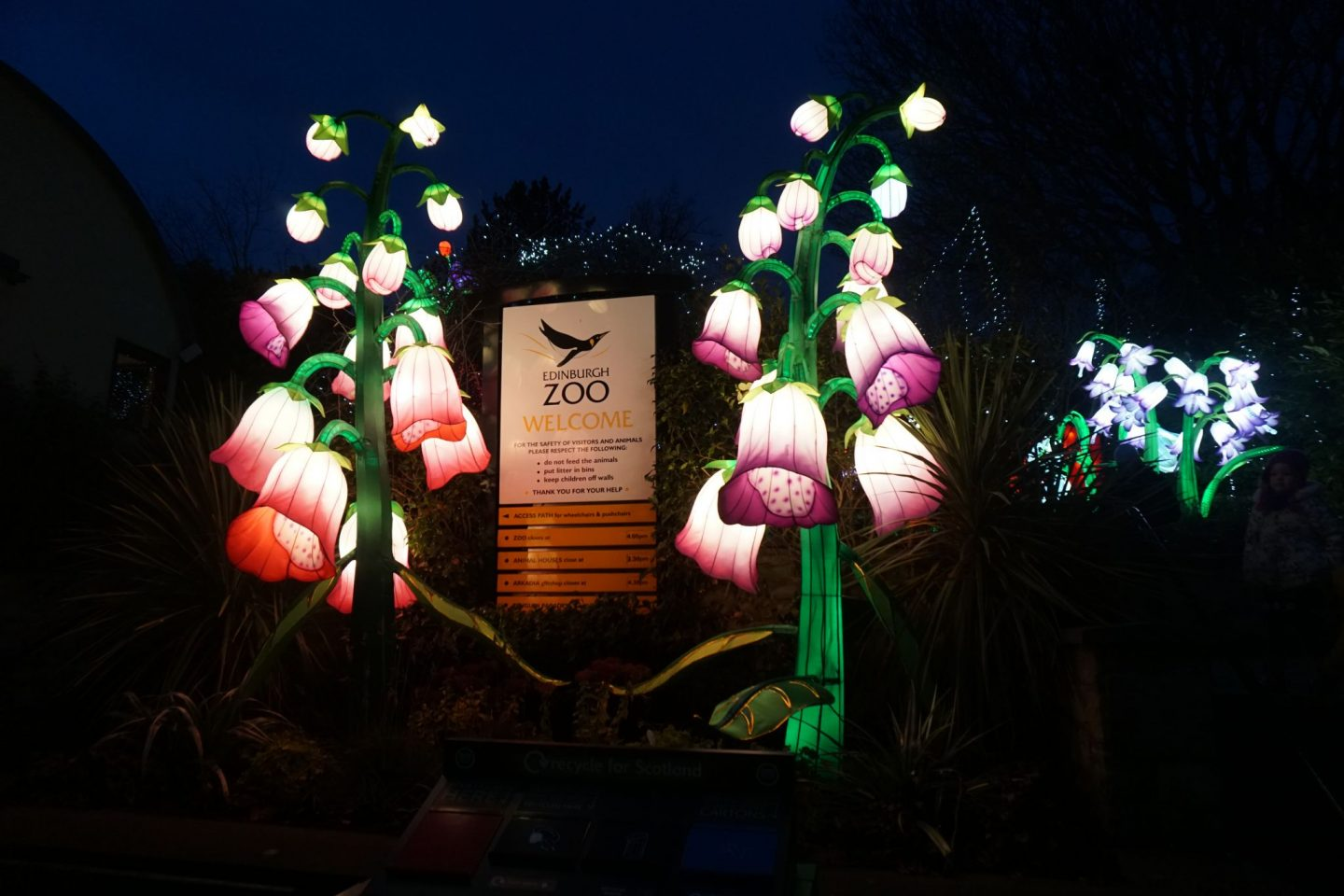 Edinburgh Zoo - Giant Lanterns of China