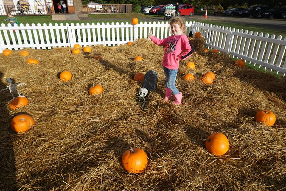 Scottish bloggers check out HalloWild, top family day out