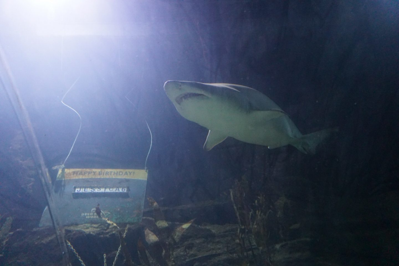 Deep sea world. Edinburgh - mindfulness for the family