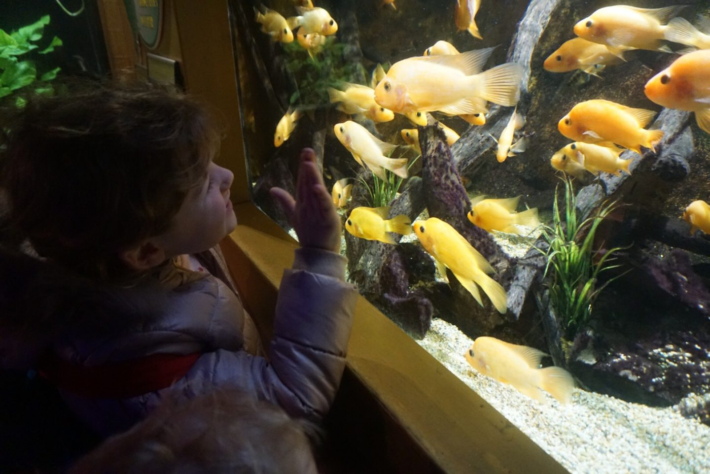 Mindfulness and Fun for all ages – Deep Sea World, Sharks and Flumes